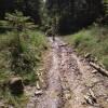 Potok dolu cestou